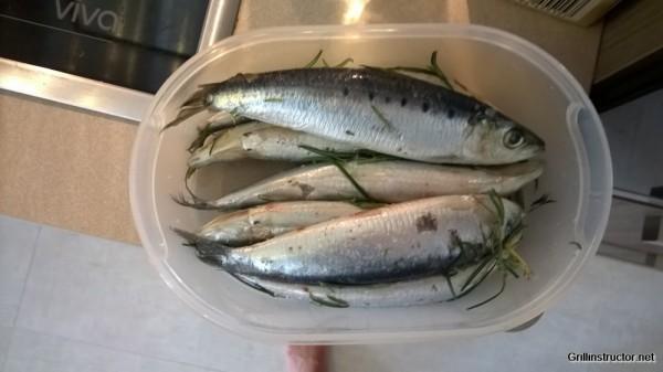 Sardinen grillen - Rezept (2)