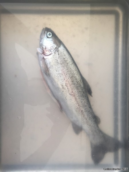 Forellen räuchern - Anleitung zum Fische räuchern (6)